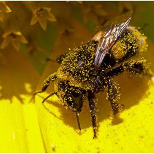 Rhinitis Pollen Allergy